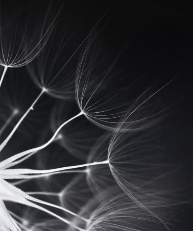 たんぽぽ「タンポポの種子」:スマホ壁紙(3)