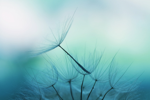 Abstract Backgrounds「Dandelion seed」:スマホ壁紙(4)