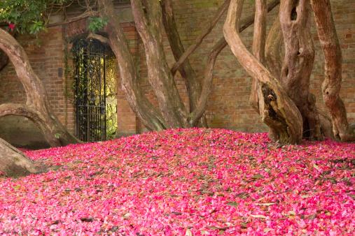 Walled Garden「Gate to Walled Garden」:スマホ壁紙(10)