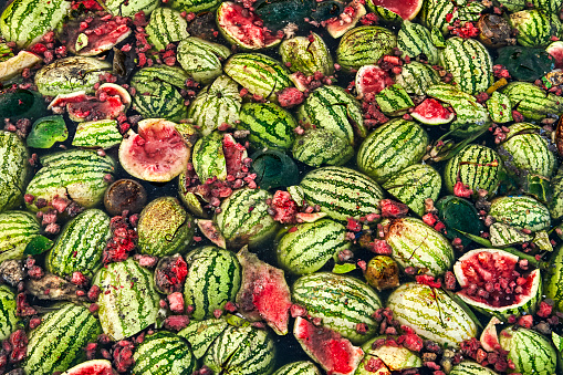 South Asia「Watermelon waste on Chandpur riverbank, Bangladesh」:スマホ壁紙(5)