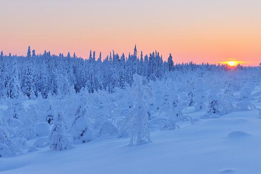 Finland「Snowy landscape at dawn」:スマホ壁紙(17)