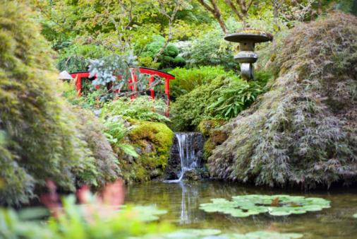 Water Lily「Butchart Gardens」:スマホ壁紙(12)