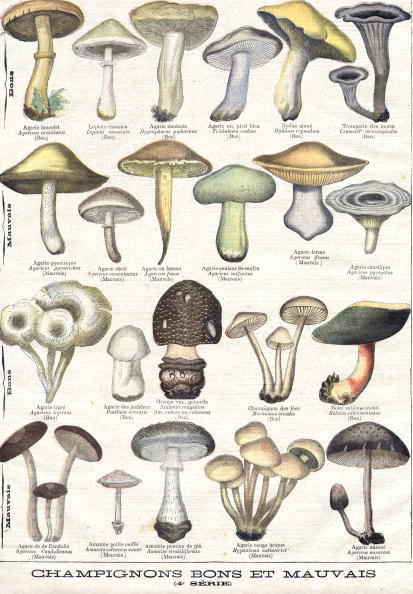 絵「Mushrooms good and bad is an engraving representing an herbarium with plant illustrations of edible mushroom and poisonous mushroom, extracted from the illustrated supplement of the Petit journal, publishing on november 1st, 1896」:写真・画像(5)[壁紙.com]