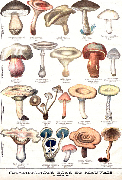 絵「Mushrooms good and bad is an engraving representing an herbarium with plant illustrations of edible mushroom and poisonous mushroom, extracted from the illustrated supplement of the Petit journal, publishing on october 25th, 1896」:写真・画像(1)[壁紙.com]