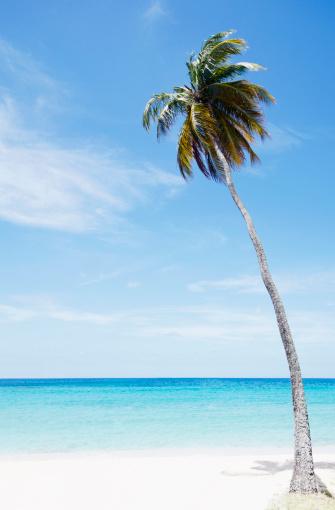 アンティグアバーブーダ「Antigua and Barbuda, Palm tree on beach」:スマホ壁紙(4)