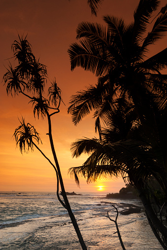 Sri Lanka「Unawatuna Beach at sunset with palm trees」:スマホ壁紙(19)