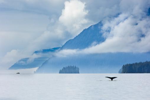 Whale Watching「Humpback Whale (Megaptera novaeangliae) tail fluke in Frederick Sound, South East Alaska, USA」:スマホ壁紙(6)