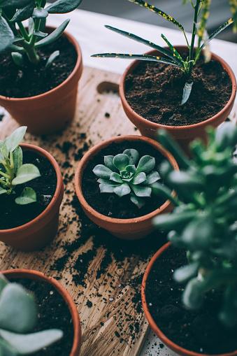 Planting「Indoors Gardening, Potting Succulent Houseplants」:スマホ壁紙(7)