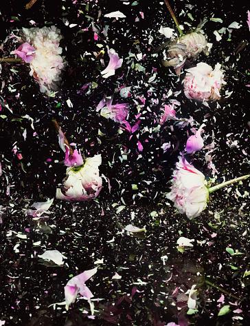Destruction「Exploding Peonies」:スマホ壁紙(14)