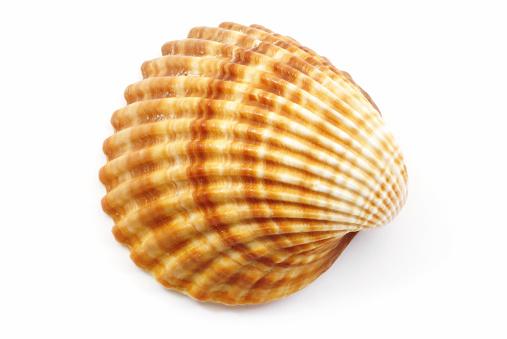 Mussel「Shell」:スマホ壁紙(10)