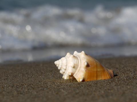 snails「Shell」:スマホ壁紙(5)