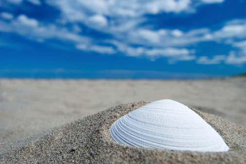 Photoshot「shell」:スマホ壁紙(15)