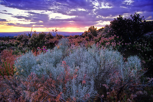 Sandia Mountains「landscape sagebrush sunset sky desert」:スマホ壁紙(13)