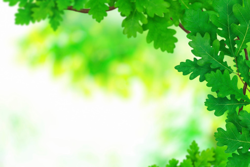 オーク林「春の植物」:スマホ壁紙(15)