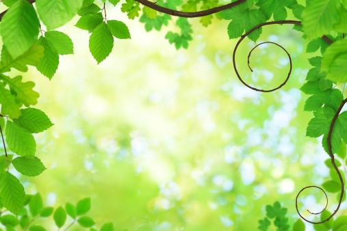 生い茂る「春の植物」:スマホ壁紙(18)