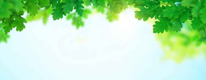 オーク林「緑のパノラマに広がる春」:スマホ壁紙(14)