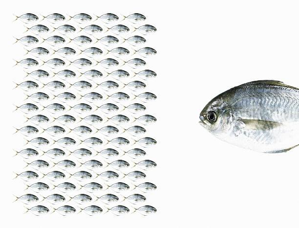 Group of Fish Facing a Large Fish.:スマホ壁紙(壁紙.com)