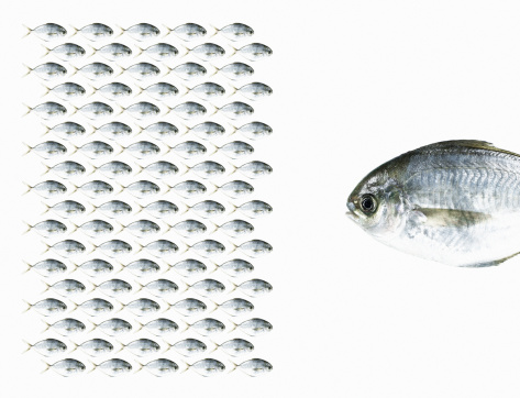 Rivalry「Group of Fish Facing a Large Fish.」:スマホ壁紙(14)