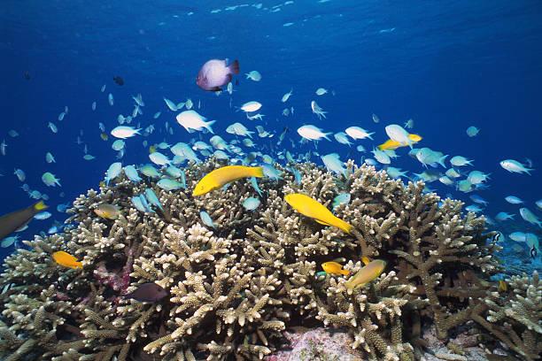 サンゴと子魚のまとめ:2005年09月16日(壁紙.com)