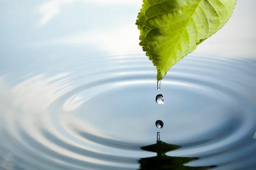 Rippled「Leaf with water drop」:スマホ壁紙(13)