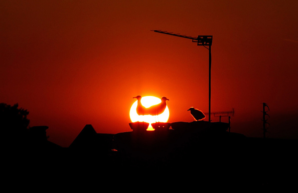 動物「The Sun Goes Down Over South London」:写真・画像(13)[壁紙.com]