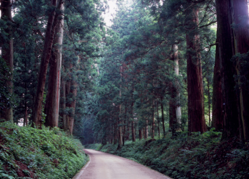 Avenue「Cedar Avenue, Nikko, Tochigi, Japan」:スマホ壁紙(13)