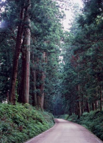 Nikko City「Cedar Avenue, Nikko, Tochigi, Japan」:スマホ壁紙(9)