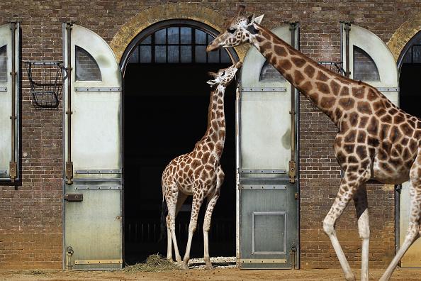 Animal Wildlife「UK Experiences Unseasonably Warm Weather」:写真・画像(17)[壁紙.com]