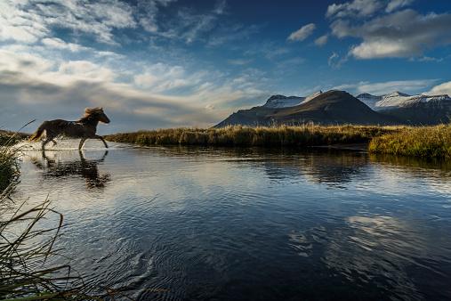 River「Horse crossing a river, Iceland」:スマホ壁紙(8)