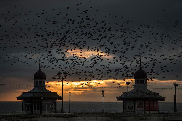 Bestpix「A Starling Murmuration Takes Place Over Blackpool」:写真・画像(11)[壁紙.com]