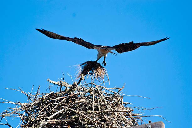 Osprey:スマホ壁紙(壁紙.com)