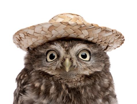 好奇心「Little Owl - Athene noctua (50 days old)」:スマホ壁紙(18)