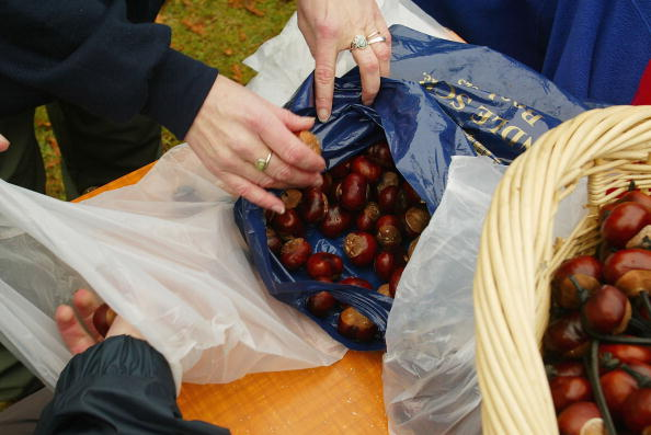 栗「World Conker Championships Held In UK」:写真・画像(16)[壁紙.com]