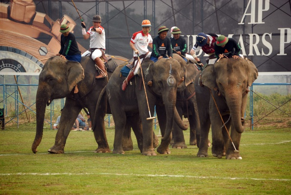 Adults Only「Elephant Polo In Thailand」:写真・画像(19)[壁紙.com]
