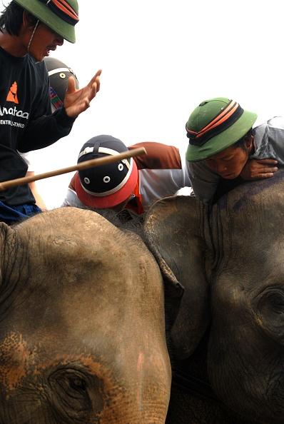 Animal Head「Elephant Polo In Thailand」:写真・画像(7)[壁紙.com]
