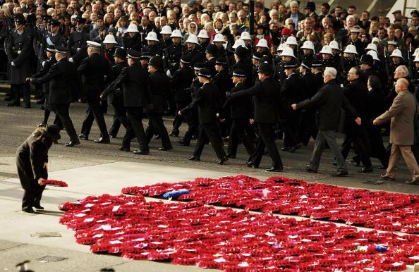 Oriental Poppy「Armistice Day Remembered」:写真・画像(11)[壁紙.com]