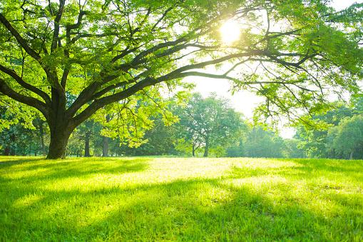 Grass「Summer Park」:スマホ壁紙(1)
