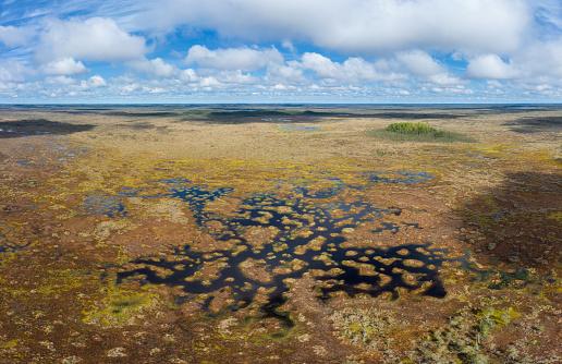 Peat「Teicu bog in springtime, Latvia」:スマホ壁紙(18)
