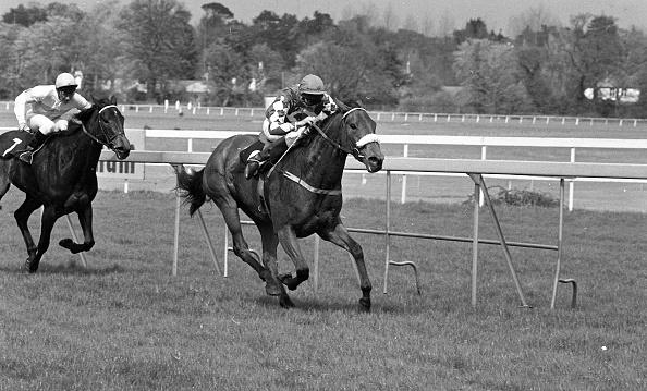 Wooden Post「The Derrinstown Stud Derby Trial Stakes 1986」:写真・画像(9)[壁紙.com]