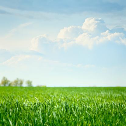 Surface Level「Idyllic grassland」:スマホ壁紙(11)