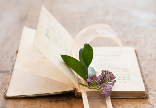 アケビ「Lavender on open book」:スマホ壁紙(17)