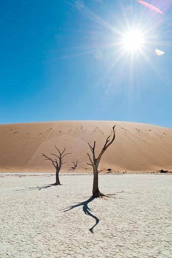 Namib-Naukluft National Park「Namibia, Namib Desert, Namib Naukluft Park, Sossusvlei, Deadvlei」:スマホ壁紙(12)
