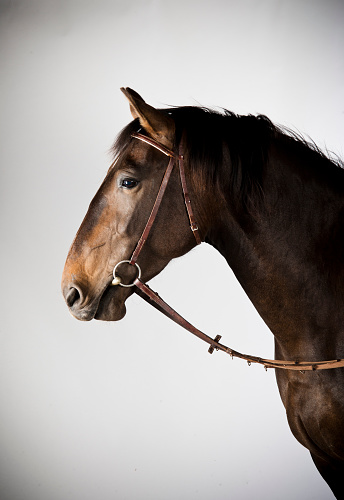 Horse「A rare Alt-Oldenburger pure breed horse.」:スマホ壁紙(16)