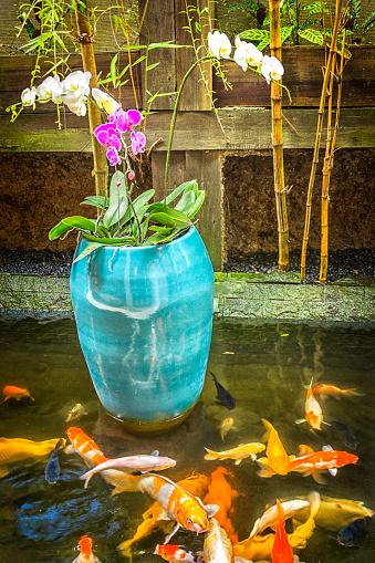 Carp「Orchids in a blue pot in a  Carp pond」:スマホ壁紙(8)