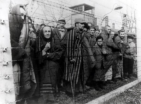 Barbed Wire「Auschwitz Survivors」:写真・画像(13)[壁紙.com]