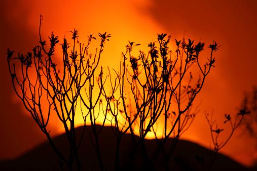 コンゴ民主共和国「January 22, 2012 - Bush silhouetted against glow of lava in crater of Nyamuragira Volcano, Kimanura Eruption.」:スマホ壁紙(14)