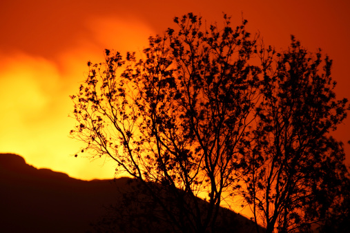 コンゴ民主共和国「January 22, 2012 - Tree silhouetted against glow of lava in crater of Nyamuragira Volcano, Kimanura Eruption.」:スマホ壁紙(15)