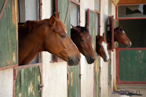 Horse「Horse stall with horses poking heads out」:スマホ壁紙(17)