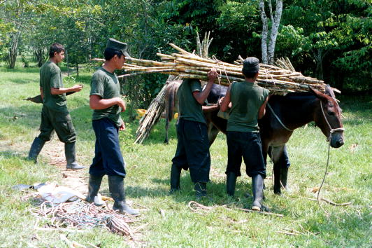 Sugar Cane「River Commerce In Colombia」:写真・画像(16)[壁紙.com]