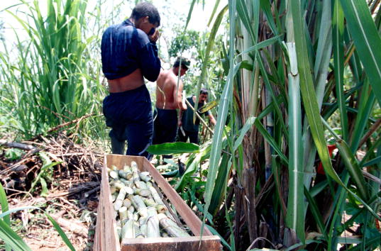 Sugar Cane「River Commerce In Colombia」:写真・画像(17)[壁紙.com]